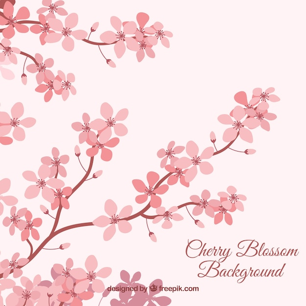 Cherry blossom background in flat style Free Vector