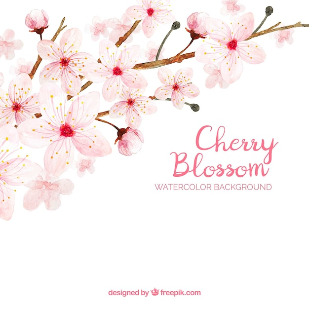 Cherry blossom background in watercolor style Free Vector