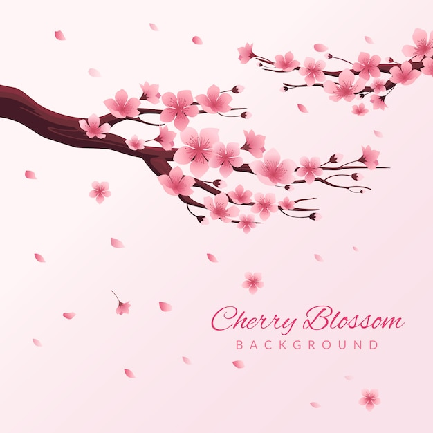 Cherry blossom background Premium Vector