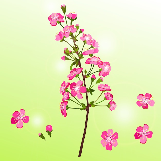 Cherry blossom branch Premium Vector