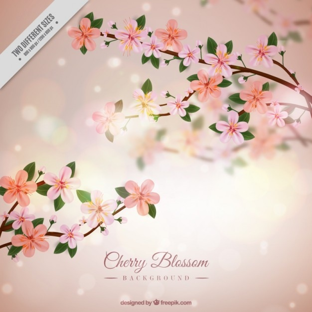 Cherry blossom bright background in realistic style Free Vector