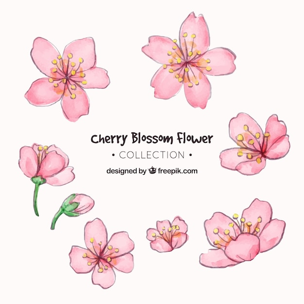 Cherry blossom collection in watercolor style Free Vector