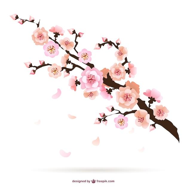 Free Vector Cherry Blossom Illustration