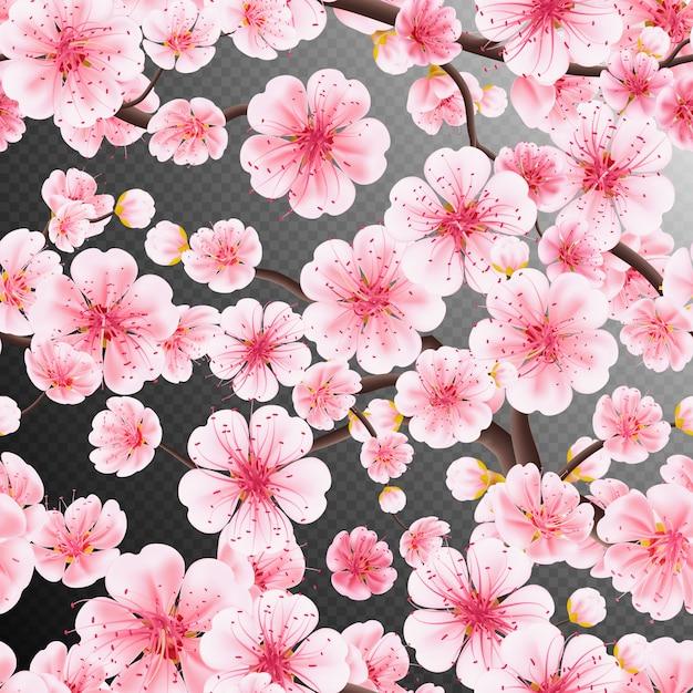 Cherry blossom, sakura flowers branch Premium Vector