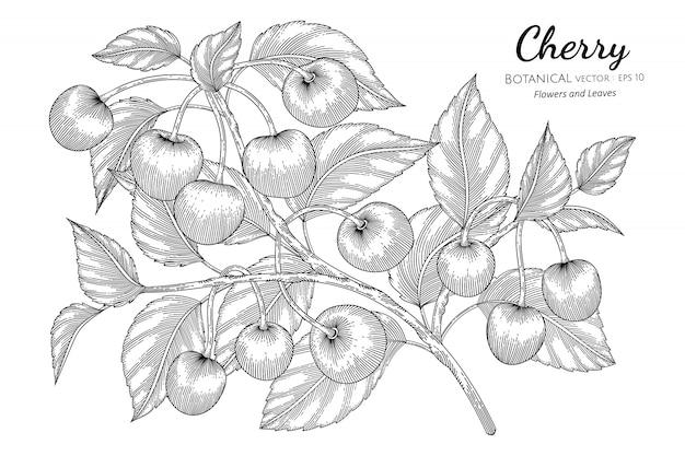 Cherry fruit hand drawn botanical illustration with line art Premium Vector