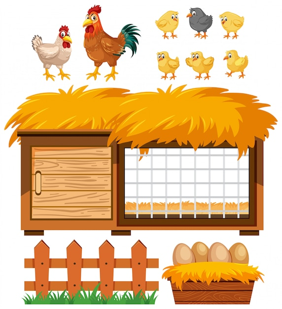 Chicken coop and many chickens on white background Premium Vector