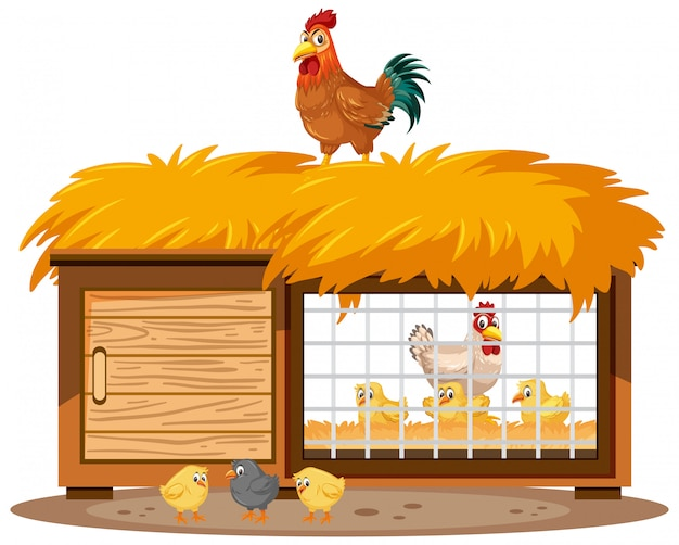 Chicken coops and chickens on white background Premium Vector
