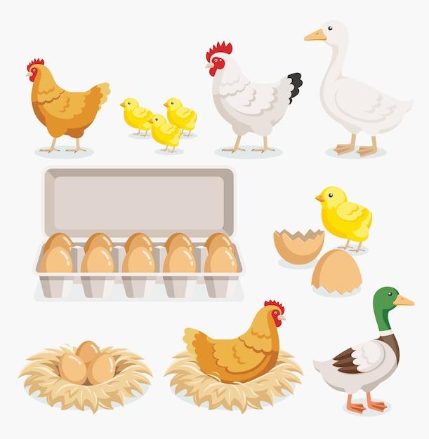 닭 오리 병아리 계란 포장 및 닭 계란 둥지에. 프리미엄 벡터