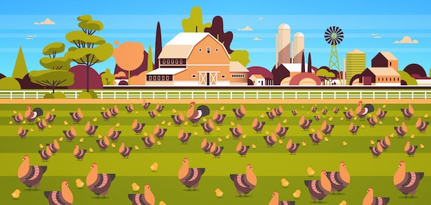 Chicken and rooster free range feeding time farming breeding hed for food poultry farm field farmland countryside landscape Premium Vector