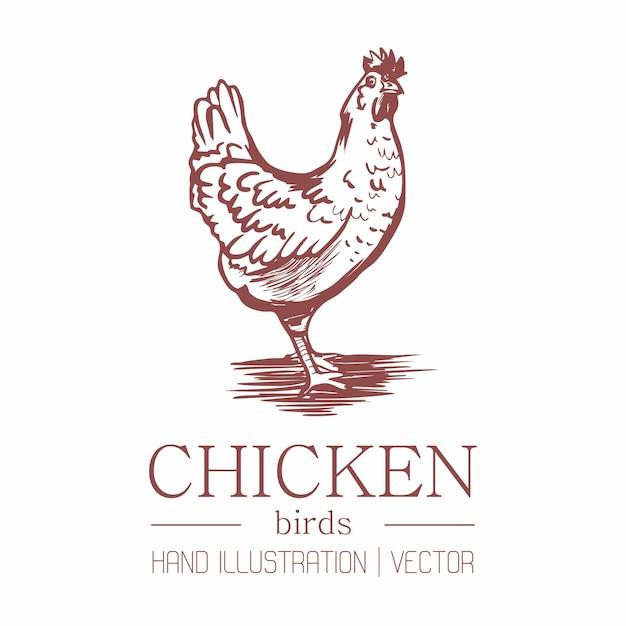 Chicken. vintage style. hand drawing. Premium Vector