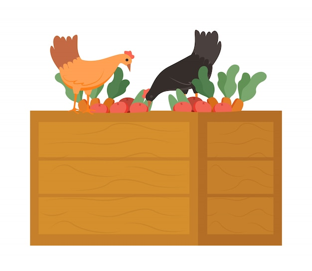 Chicken on wooden box eating carrots food vector Premium Vector