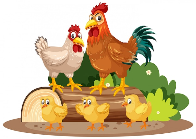 Chickens and little chicks in the park Premium Vector