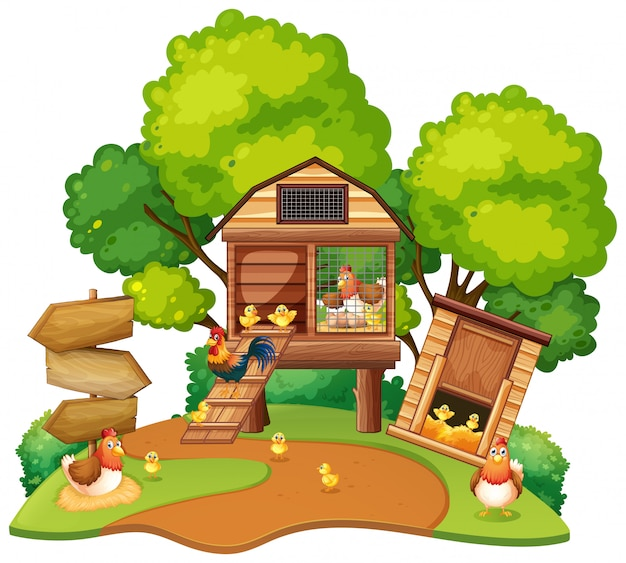 Chickens lives in chicken coops Free Vector