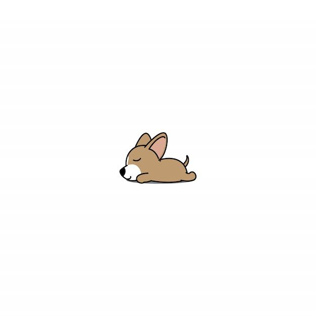 チワワ犬の睡眠 Premiumベクター