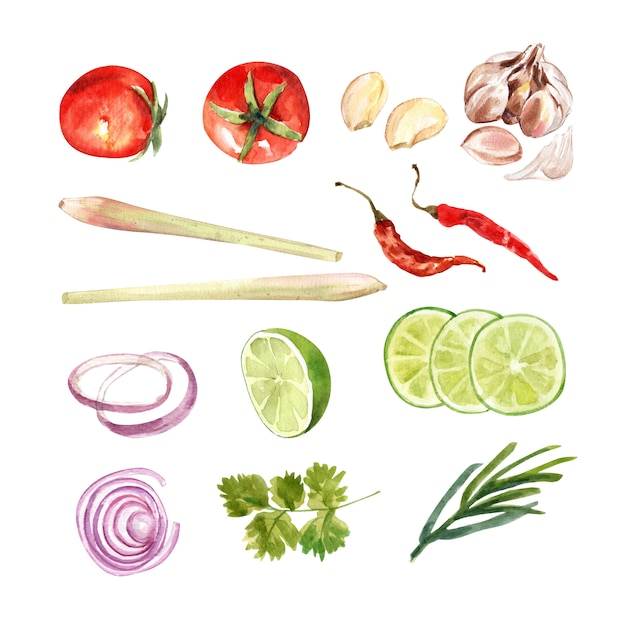 Комплект изолированного кориандра акварели, травы лимона, chili, иллюстрации лука для декоративного использования. Бесплатные векторы