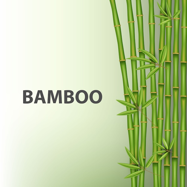 Chinese bamboo grass tree. tropical asian plant. Premium Vector