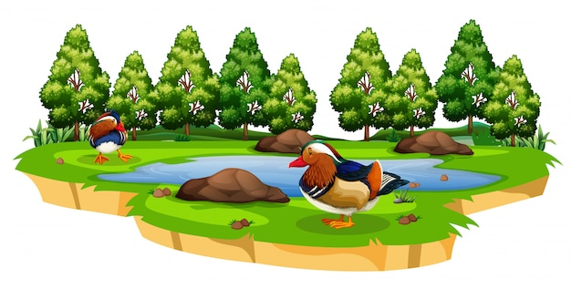 Chinese duck in park Free Vector