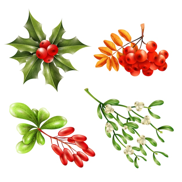 Christmas berry branches set Free Vector