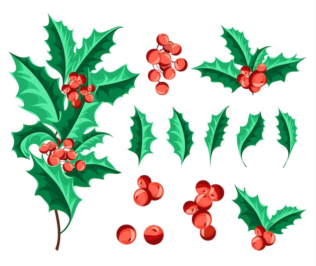 Christmas holly berry set. Free Vector