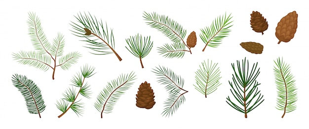 Christmas tree branches, fir and pine cones, evergreen vector set, holiday decoration, winter symbols. nature illustration Premium Vector