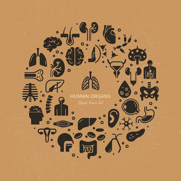 Circular template of linear  icons of human internal organs and skeleton on a medical theme. Premium Vector