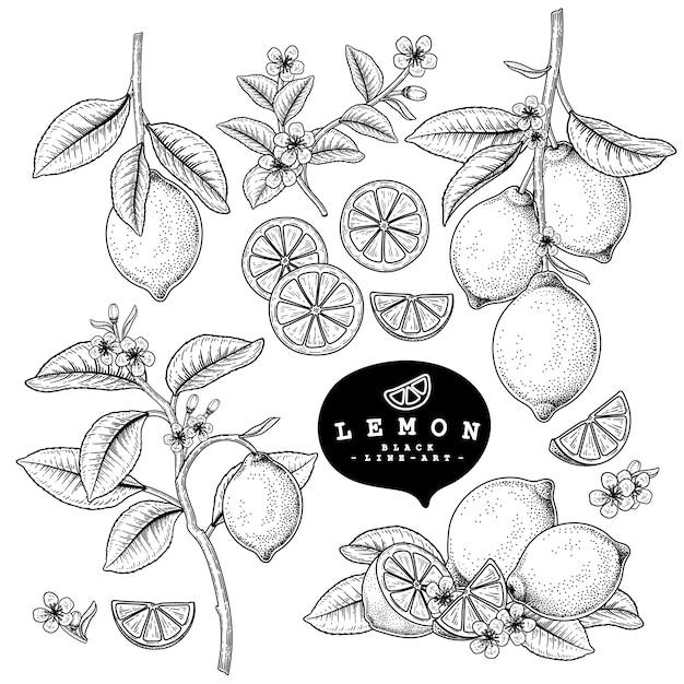 白で隔離される柑橘系の果物のレモン装飾セット Premiumベクター