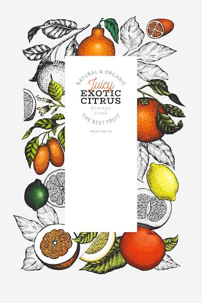 Citrus fruits template. hand drawn colour fruit illustration. Premium Vector