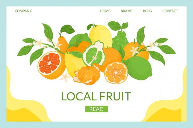 柑橘類のローカル着陸のイラスト。クローズアップ組成新鮮なトロピカルフルーツ。熟したジューシーなグレープフルーツ、甘いオレンジ、サワーレモンの天然抗酸化物質。健康を改善するためのビタミンc。 Premiumベクター