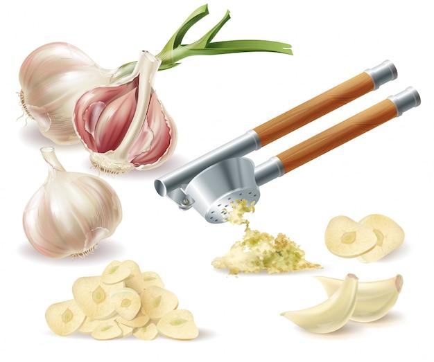 Clipart con testa d'aglio germogliato, chiodi di garofano sbucciati, fette tagliate e pressa di metallo Vettore gratuito
