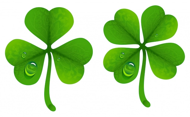 Clover leaves with drops of dew. lucky clover leaf. four-leaf and trifoliate clover Premium Vector