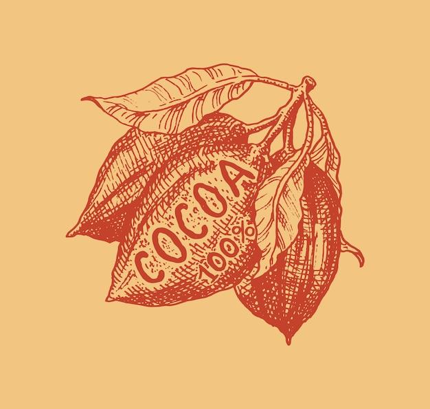 ココアフルーツ。豆や穀物。 tシャツ、タイポグラフィ、ショップ、看板のビンテージバッジまたはロゴ。手描きの刻まれたスケッチ。 Premiumベクター
