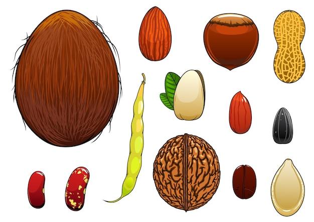 Coconut, almond, hazelnut, pistachio, coffee bean, whole and peeled peanuts Premium Vector