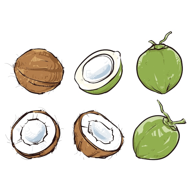 Coconut isolated Premium Vector