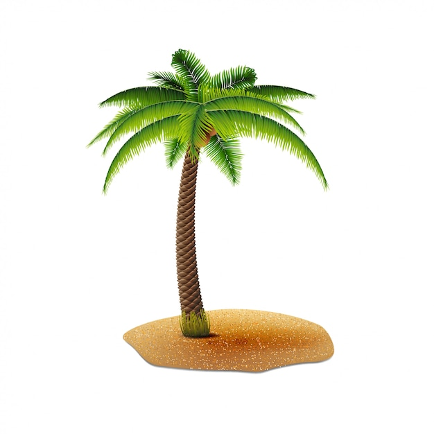 Coconut palm isolated on white background for your creativity Premium Vector