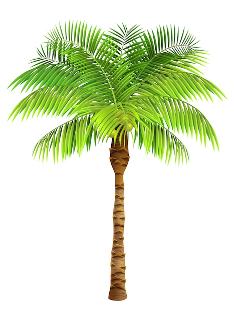 Coconut palm tree. plant, garden, resort. nature concept. Free Vector