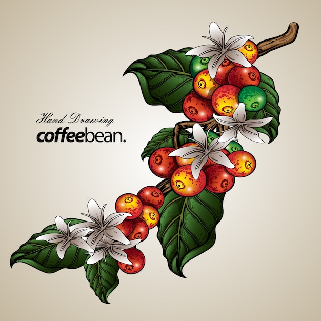 Hand Drawn Coffee Tree And Bean Frame Free Download Vector Psd And Stock Image