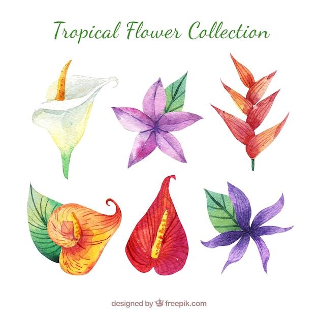 素敵な水彩の熱帯の花collectio 無料ベクター