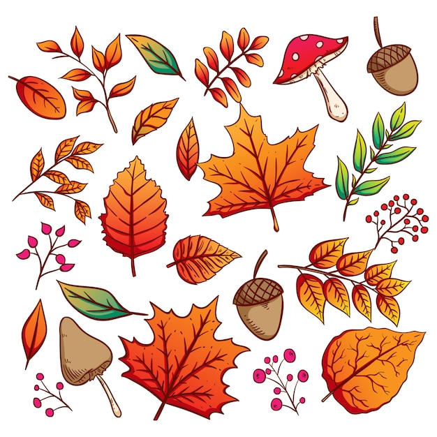 Collection of autumn leaves and acorns with colorful hand drawn style Premium Vector