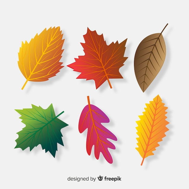 Collection of autumn leaves realistic style Free Vector