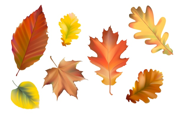 Collection of autumn leaves vector Free Vector
