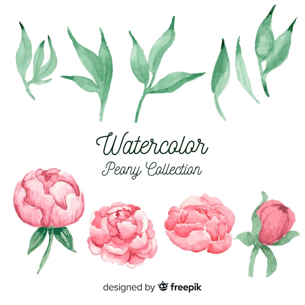 Collection of beautiful peony flowers in watercolor style Free Vector