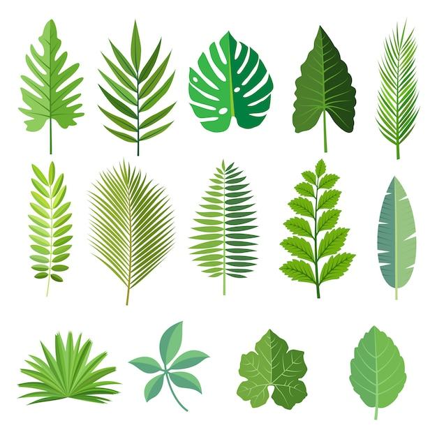 Premium Vector Collection Of Beautiful Tropical Leaves Set 1300 x 986 jpeg 158 кб. https www freepik com profile preagreement getstarted 5959744