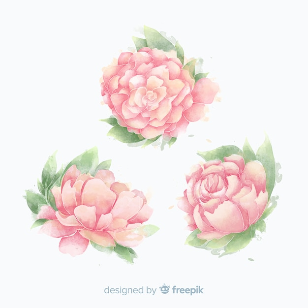 Collection of beautiful watercolor peony flowers Free Vector