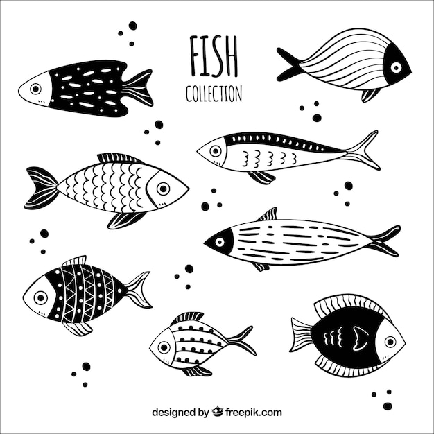 Collection of black and white hand drawn fish Free Vector