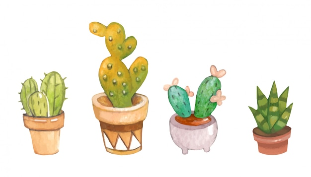 The collection of cactus in the plant pot on the white background Premium Vector