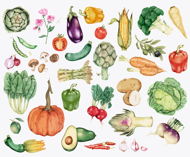 Collection of colorful vegetable illustration Premium Vector