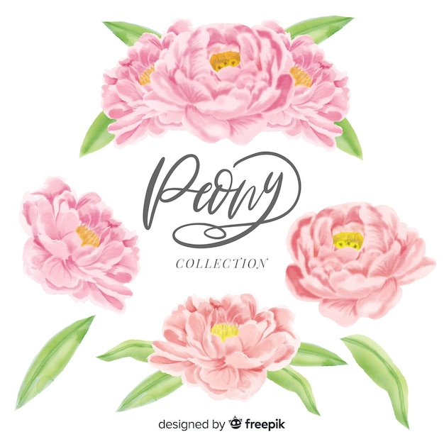 Collection of elegant peony flowers in watercolor style Free Vector