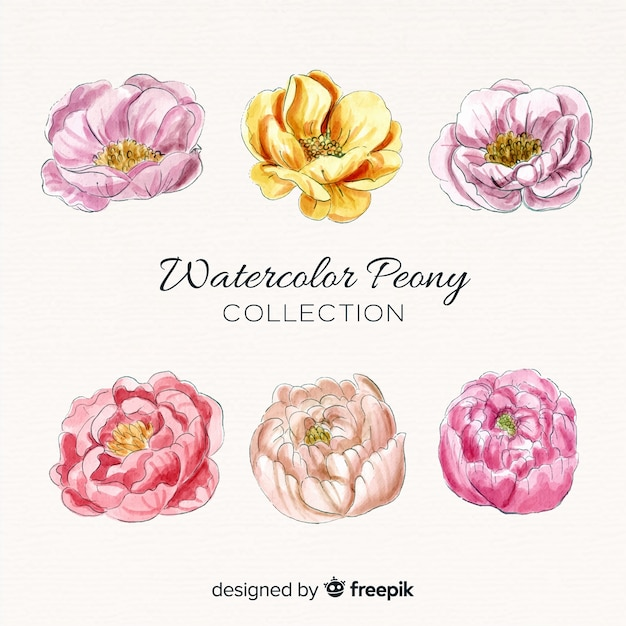 Collection of elegant watercolor peony flowers Free Vector