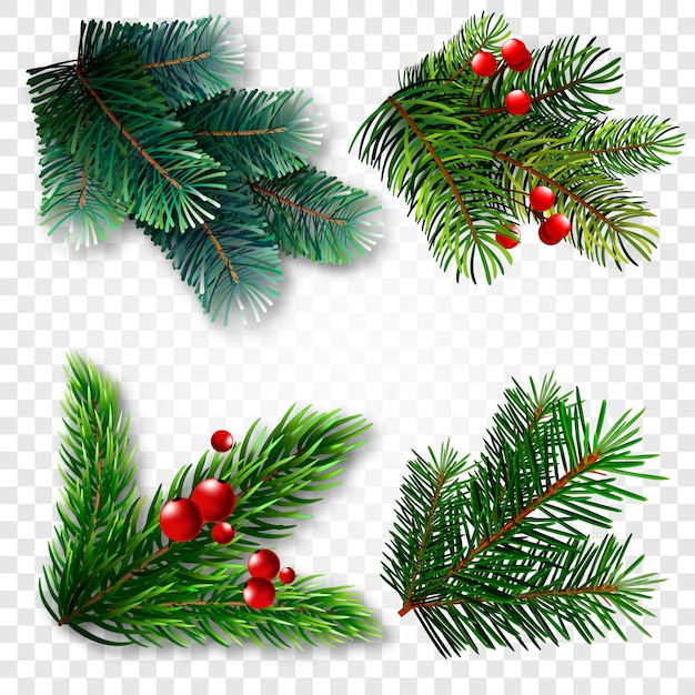 Collection of fir branches Premium Vector
