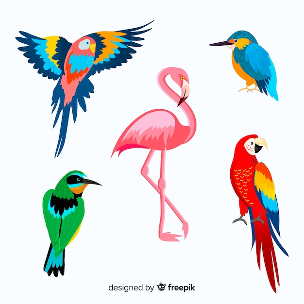 Collection of flat exotic bird Free Vector